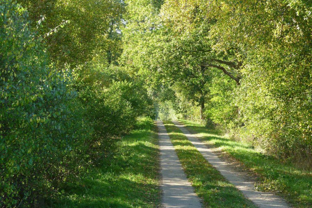 Wanderweg bei Süderdeich