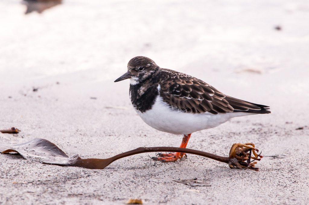 Vogel am winterlichen Strand in Büsum